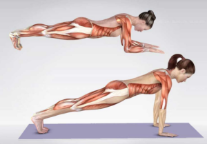 Les dorsaux, l'autre point fort du Pilates